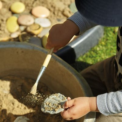 8 Fósiles sensoriales para investigar