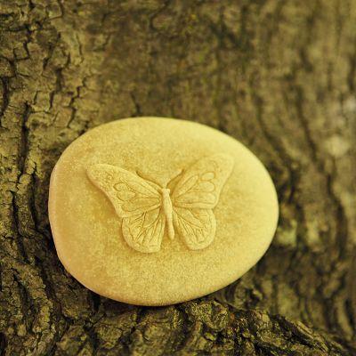 8 Insectos sensoriales para investigar