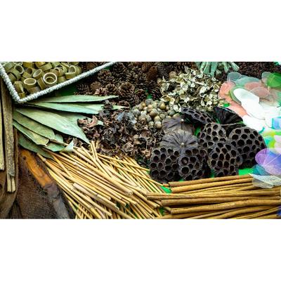 Caja tesoros de botánica