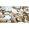 Caja tesoros de conchitas marinas