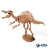 Dr. Steve - Dino excav. Kit Spinosaurus Skeleton