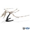 Dr. Steve - Flying Monsters Excav. Kit Dsungaripterus Skeleton