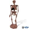 Dr. Steve - Cave man excav. Homo Neanderthalensis Skeleton