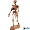 Dr. Steve - Cave girl excav. Australopithecus Afarensis Skeleton