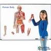 Cuerpo Humano Magnético dos planos