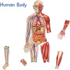 Cuerpo humano magnético doble