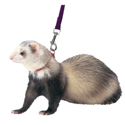 Mazuri Ferret Harness & Lead azul