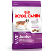 ROYAL CANI giant junior