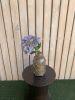 Hortensia lila full S