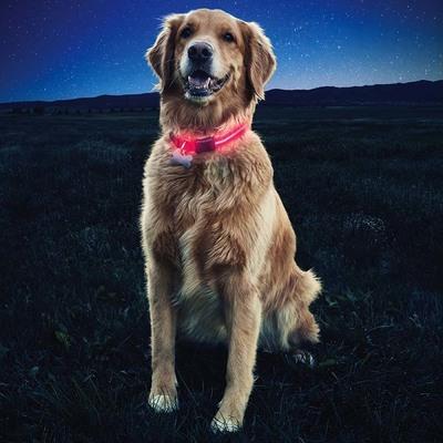 Collar Entrenamiento LED de Perro Mascota Nite Dawg Nite Ize