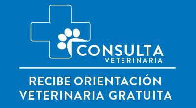 Consulta Veterinaria Gratis