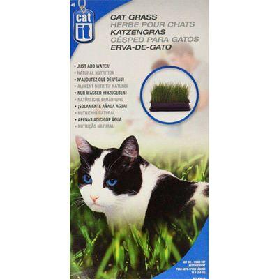 Cat It Pasto para Gatos Semillas Hierba gatera 75gr