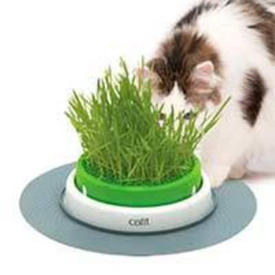 Cat it Senses 2.0 Grass Planter