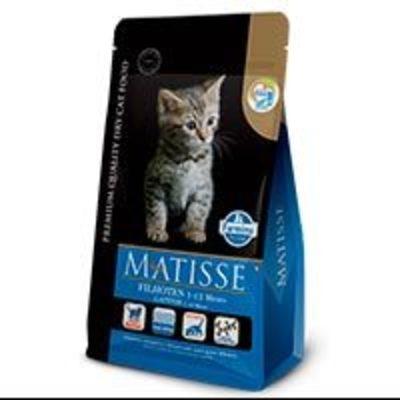 Matisse Gatitos Filhotes (Gatitos)