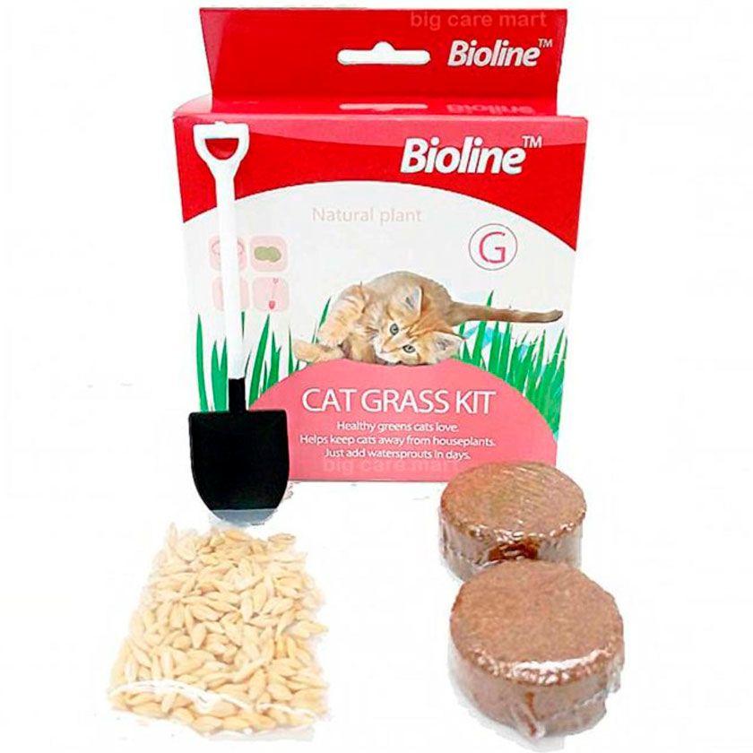 Bioline Kit de siembra hierba gatera 12gr