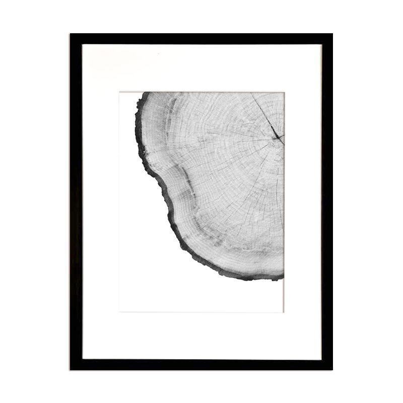 Corteza de Arbol Blanco I