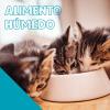 alimentos humedos para gatos