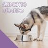 alimentos humedos para perros