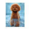 Peluca de Cuerpo (Modelo Teddy )