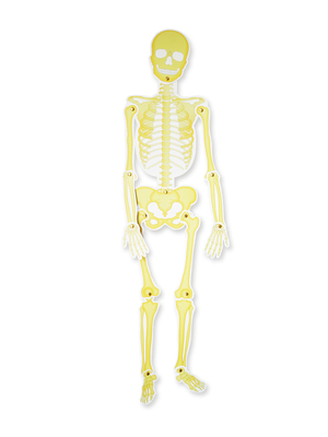 Esqueleto unidad