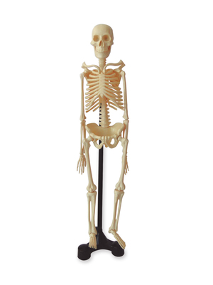 Mini esqueleto