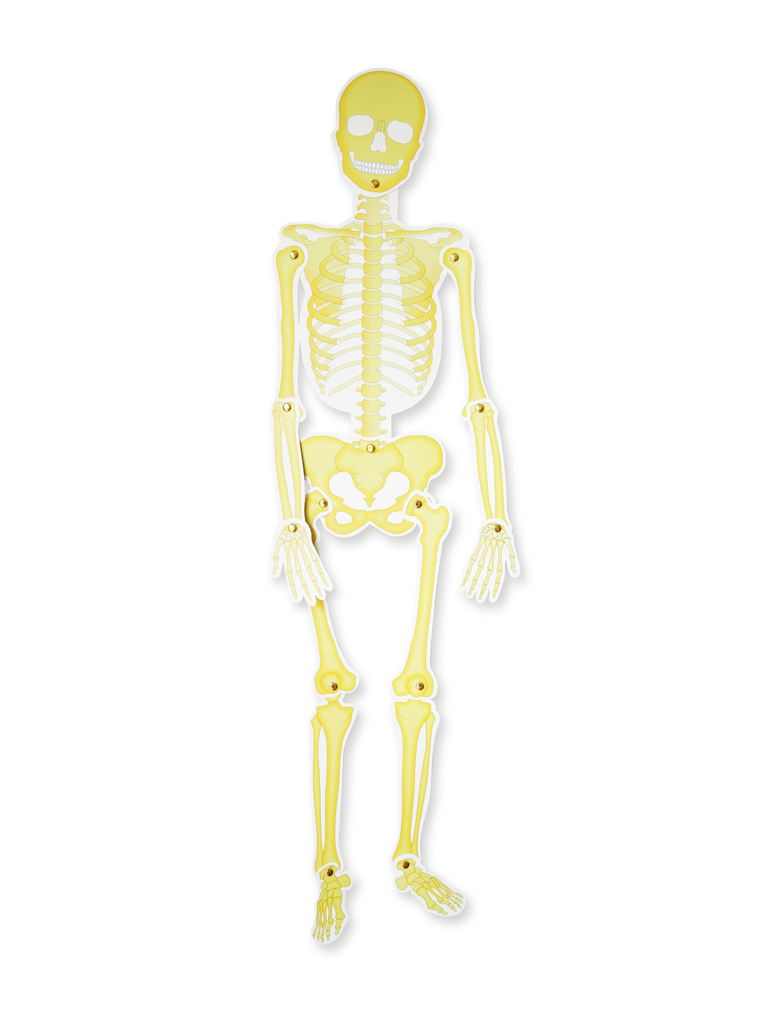 Set de esqueletos