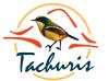 Uniformes Tachuris