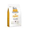 Brit Dog Puppy Lamb