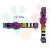 ZeeCat Collar Prisma