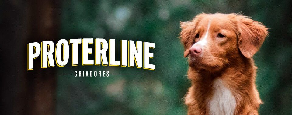 /collection/alimentos-secos-perro?brand_static[]=Proterline