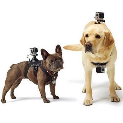 Arnés Pechera Para Perro Dog Fetch Cámara Deportiva