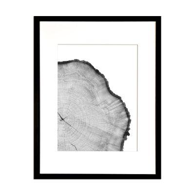Corteza de Arbol Blanco2