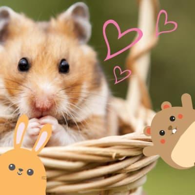Alimentos para roedores