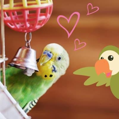 Juguetes y accesorios para aves