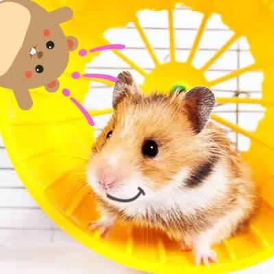 Juguetes y accesorios para roedores