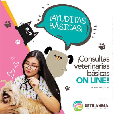 Consultas veterinarias básicas online