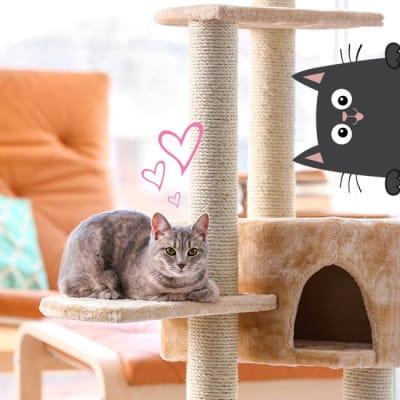 Juguetes y accesorios gatos