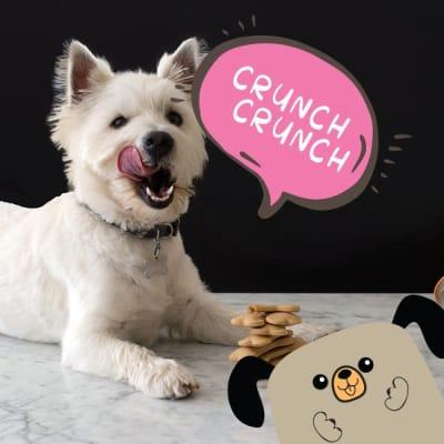 Snacks y Carnazas perros