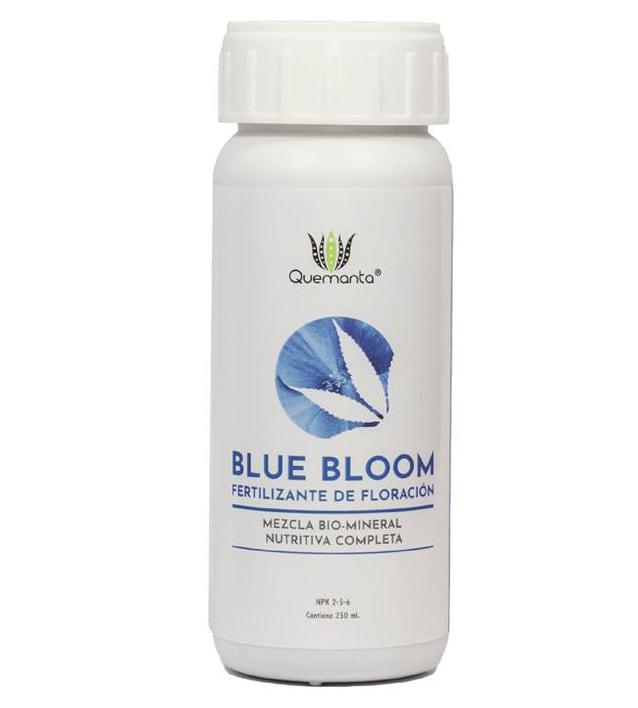 Quemanta - Blue Bloom