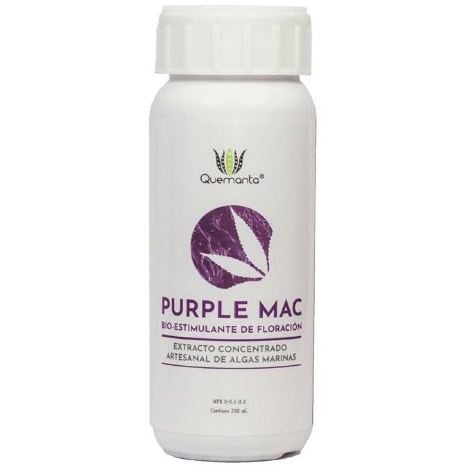 Quemanta - Purple Mac