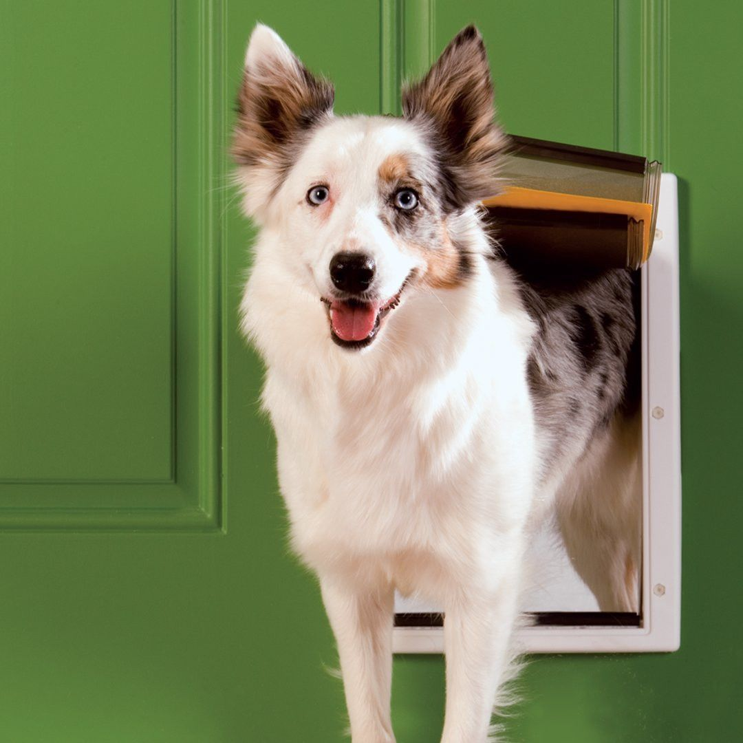 Puerta perro Mediana para Climas Extremos