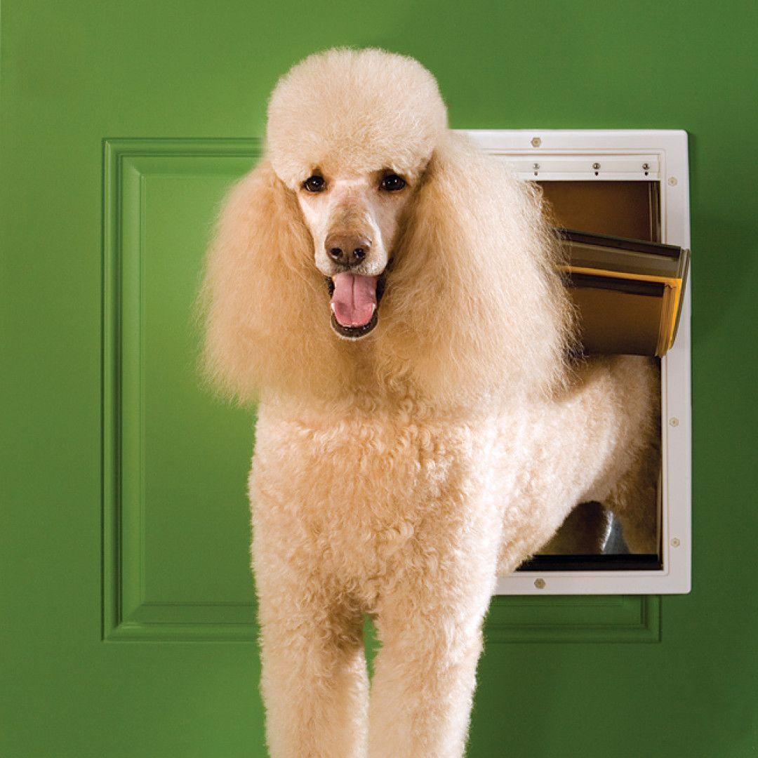 Puerta perro Grande para Climas Extremos
