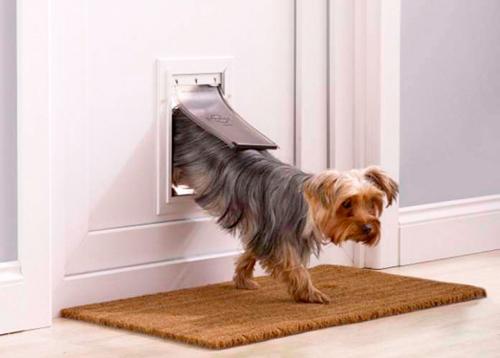 Puerta Perro Pequeño