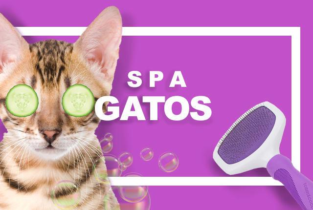 SPA para Gatos