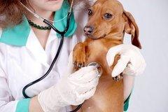 Spv Consulta Veterinario