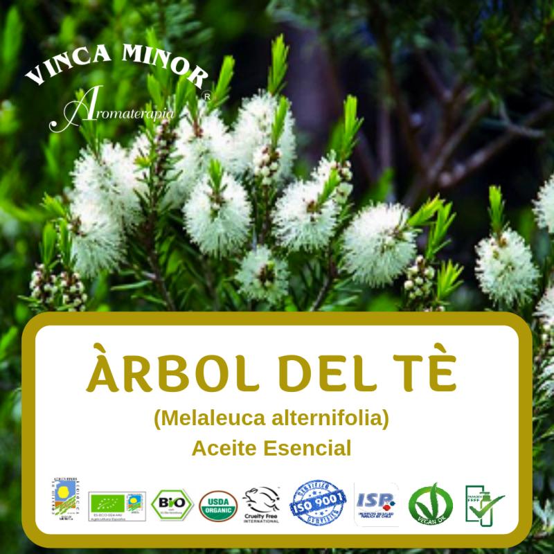 Árbol de Té (Melaleuca alternifolia)