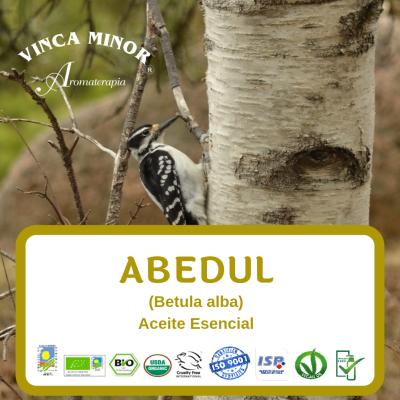 Abedul (Betula alba)