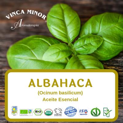 Albahaca (Ocinum basilicum-basil)