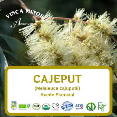 Cajeput (Melaleuca cajuputii)