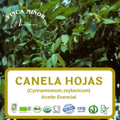 Canela hojas (Cynnamomum zeylanicum)